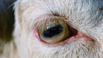 Goat Simulator - Xbox Trailer